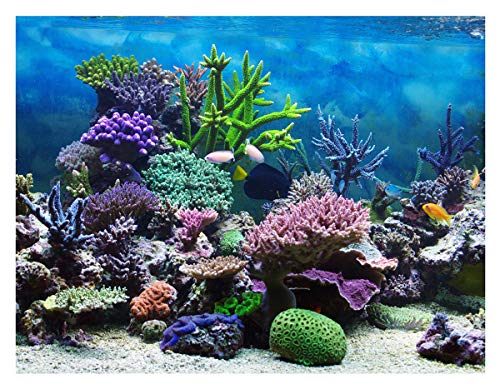 Beautiful Coral Reefs Background 5X7ft Tropical Ocean Underwater Ecosystem Photography Backdrop for Photo Studio Party Kids Room Props BT007 -