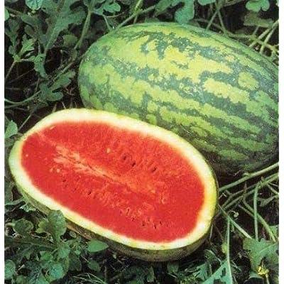 Almost Seeds- Bio Watermelon Seeds Perennial Mini Cucumber Watermelon Crimson Sweet Sugar Sweet Yellow Pineapple Melon Watermelon Edible Fruit Garden : Garden & Outdoor