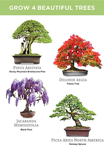 The 8 best bonsai