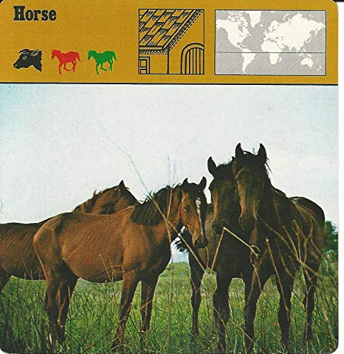 1975 Editions Rencontre, Animals Card, 08.187 Horse