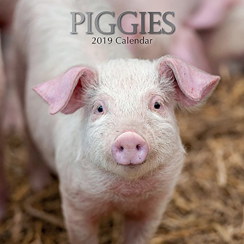 2019 Wall Calendar - Pigs Calendar, 12 x 12 Inch Monthly View, 16-Month, Farm Animals Theme, Includes 180 Reminder Stickers
