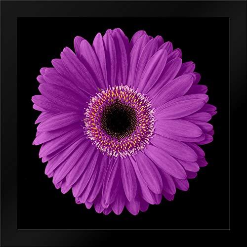 Purple Gerbera Daisy Framed Art Print by Christensen, Jim