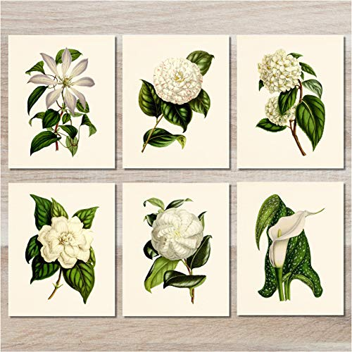 (Flower Wall Art - Vintage Floral Decor (Set of 6) - 8x10 - Unframed - Botanical Prints - White)