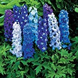 Magic Fountain Mix Delphinium Flower Seed Pack