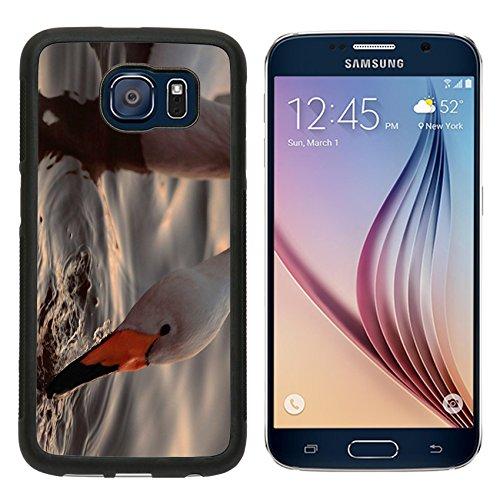 msd-premium-samsung-galaxy-s6-aluminum-backplate-bumper-snap-case-a-closeup-portrait-of-whooper-swan