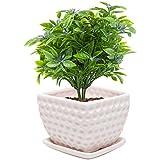 MyGift® Small Decorative White Ceramic Golf Ball Style Dimple Design Plant Flower Planter Pot w/ Saucer