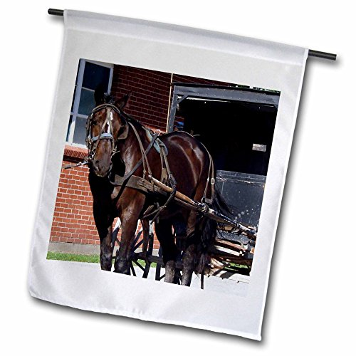Amish Buggy Garden - 3dRose Cassie Peters Horses - Amish Horse and Buggy - 18 x 27 inch Garden Flag (fl_262928_2)