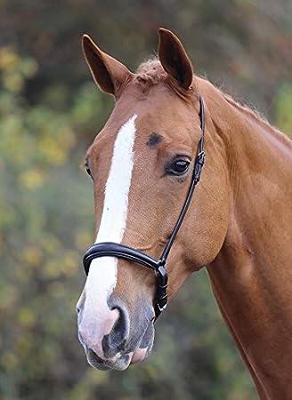 Shires Acolchado Blenheim Drop muserola equitación Caballo Muestra Concurso Completo