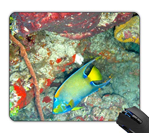 OTTIET Custom Queen Angel Fish Gaming Mouse Pad 9.5 X 7.9 Inch (240mmX200mmX2mm).Non-Slip Thick Rubber Large Mousepad.