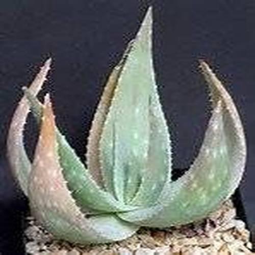 Grow Light Garden Propagator in US - 6