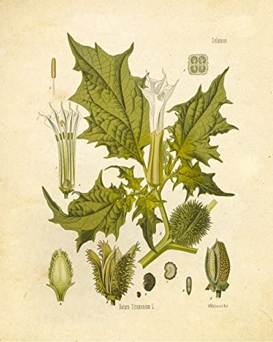 home, kitchen, wall art,  posters, prints 1 on sale Botanical Prints Vintage Wall Art Magical Herbalism Witchcraft in USA