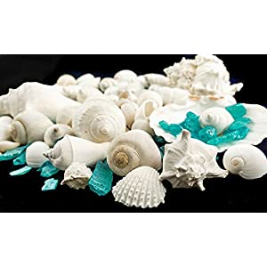 Nautical Crush Trading White Decorative Sea Shell with Pearlized Ocean Blue Sea Glass Chips |1 Pound for Decoration | Shells for Craft TM 20