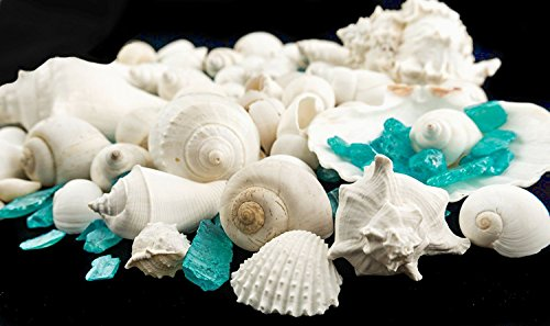 - White Decorative Sea Shell with Pearlized Turquoise Sea Glass Chips |1 Pound for Decoration | Shells for Craft | (1 Pack) | Plus Free Nautical Ebook by Joseph Rains