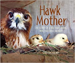 Image result for hawk mother the story of a red tailed hawk who hatched chickens