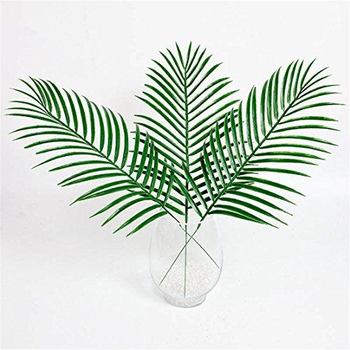 fan palm - 6