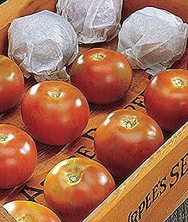 AGROBITS Tomate Long Gardien - Une des Meilleures tomates de Stockage d'hiver! (15 See)