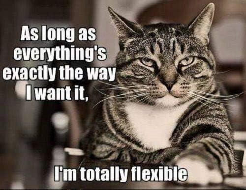 Photo Novelty Fridge Magnet Funny Cute Cat Im Totally Flexible Fridge Magnet Novelty Photo Fridge Magnet