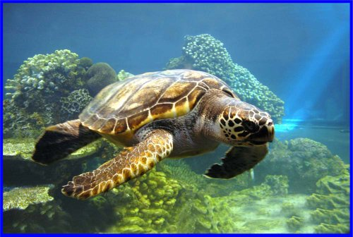 Loggerhead Sea Turtle Swims in Ocean - Etched Vinyl Stained Glass Film, Static Cling Window Decal