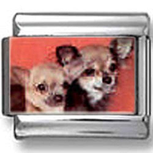Chihuahua Dog Photo Italian Charm ()