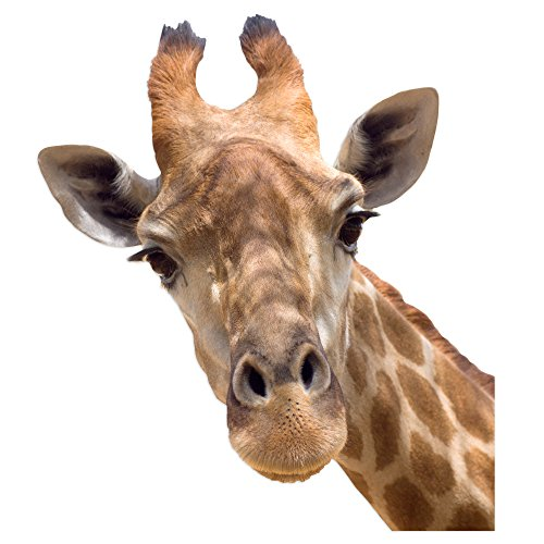 Giraffe Window - Colorbok 10004 Joy Riders Giraffe Window Cling