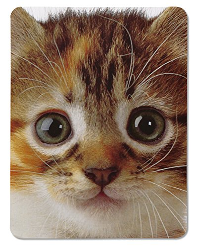Birthday Free Cards - American Greetings Kitten Birthday Card with Music