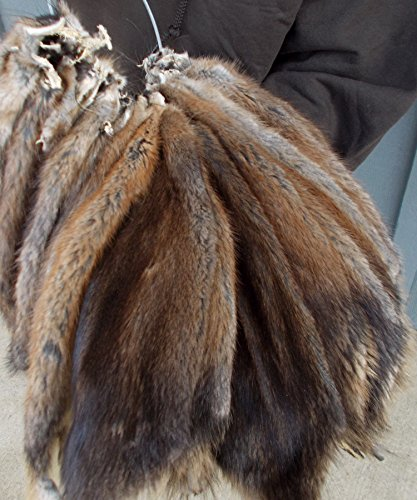 1 - Large Tanned Prime Winter Muskrat (Muskrat Fur)