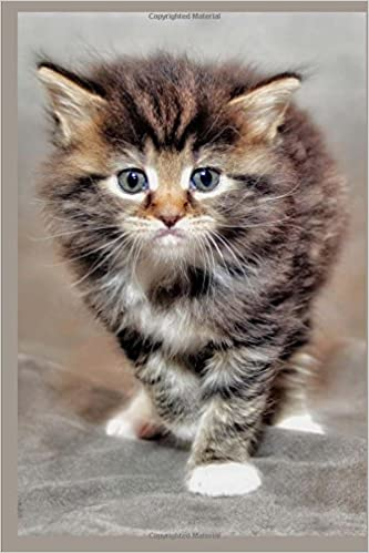 Buy So Very Cute Maine Coon Kitten Cat Journal Book Online At Low Prices In India So Very Cute Maine Coon Kitten Cat Journal Reviews Ratings Amazon In