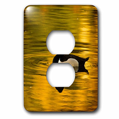 3dRose Danita Delimont - Ducks - Male ring-necked duck, swimming, Dawson Creek Park, Hillsboro, Oregon - Light Switch Covers - 2 plug outlet cover - Outlets Hillsboro