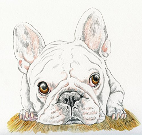 French Bulldog Original Drawing Pet Dog Art-7 x 8 Inches-Carla Smale by Carlas Pet Portraits