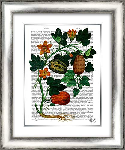 (Squash Vine 1 20x24 Silver Contemporary Wood Framed and Double Matted Art Print by Fab)