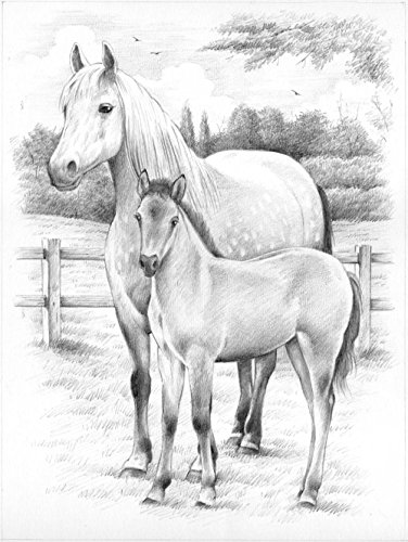Reeves Horse and Foal Sketching by Numbers, Medium