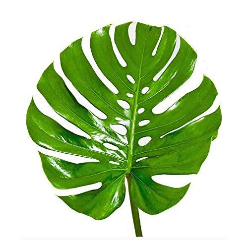 AMERICAN PLANT EXCHANGE Split Leaf Philodendron Monstera Deliciosa Live Plant 3 Gallon Indoor/Outdoor Fruit Producing! by AMERICAN PLANT EXCHANGE (Image #3)