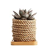 Cheap Rachel's choice 3.25″Rope Surrounded Shape Sucuulent Cactus Plant Pots Flower Pots Planters Containers Window Boxes With Bamboo Tray Brown