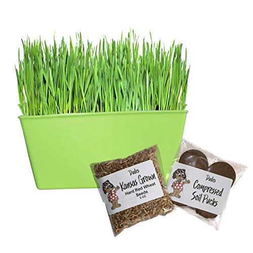 Cat Grass Kit Indoor Planter - Natural Digestive Aid to Keep Your Cat Healthy - Kansas Grown Seeds, Soil Pucks and Planter