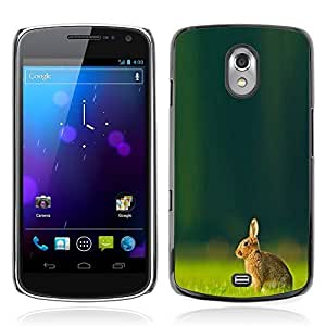 Graphic4You Cute Rabbit Bunny Animal Design Hard Case Cover for Samsung Galaxy Nexus