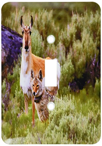 - 3dRose lsp_62362_1 Coyote N Antelope Share The Land Single Toggle Switch