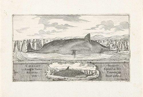"Classic Art Poster - Sperm whale stranded at Egmond aan Zee, 1764, Vincent Jansz. van der Vinne, 1764 9"" x 13"""
