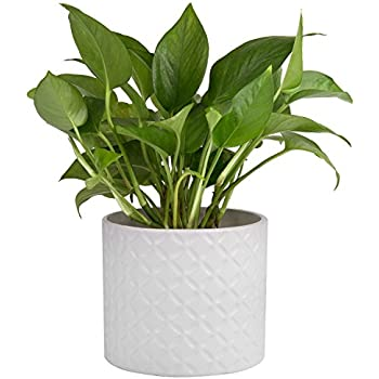 Amazon Com 5 Inch White Ceramic Round Succulent Plant