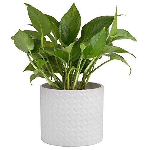 5-Inch White Ceramic Round Succulent Plant Pot, Small Flower Planter with Diamond Texture