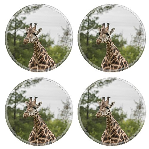 Liili Round Coasters Giraffe at the grass land of safari land Photo (Safari Grass)