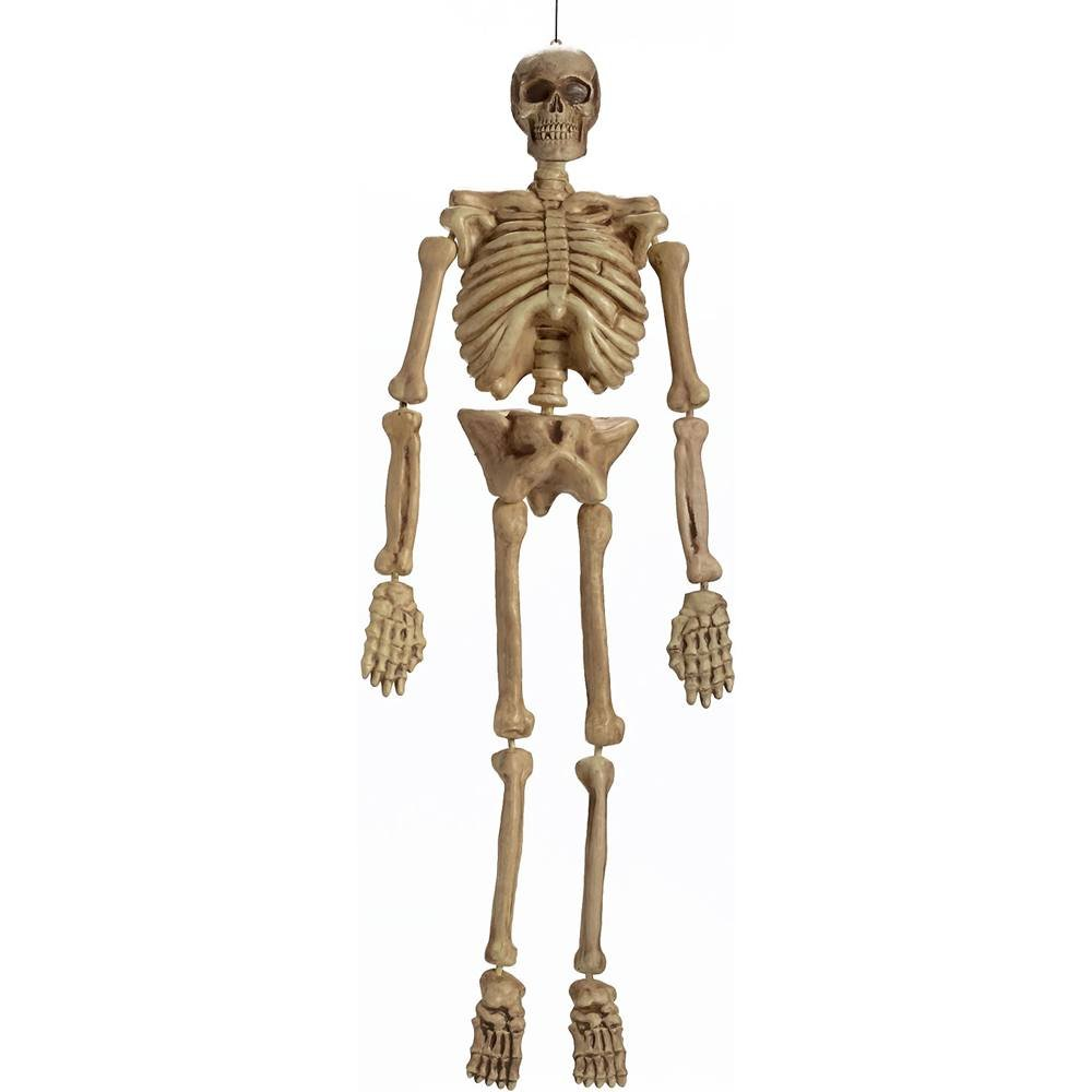 Amazon.com: Realistic Hanging Skeleton 5ft Life Size Halloween ...