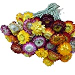 TELLW-Natural-Flower-Bouquet-Daisy-Flower-Home-furnishings-Decoration-Living-Room-Floor-Dry-Branch-Floral-Ornament-Gift