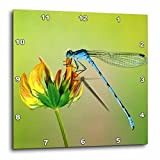 3dRose dpp_53238_1 Blue Dragonfly Wall Clock, 10 by 10-Inch For Sale
