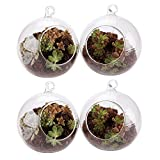 Cheap T4U 5.75″ Glass Hanging Plant Terrariums Tealight Holder – Pack of 4, Globe Air Plant Pot Container Planter for Succulent Cactus Fern, Candle Holder for Party Wedding Decor Birthday Christmas Gift