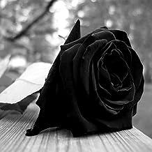 Black Rose & Oud Perfume Body Spray Mist TRIPLE SCENTED SUPER STRONG 125ml - Vegan & Cruelty Free