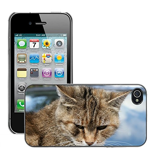 Bild Hart Handy Schwarz Schutz Case Cover Schale Etui // M00134152 Katzen Haustier Tier // Apple iPhone 4 4S 4G