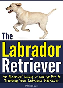 Your Labrador Retriever ( How to Train a Labrador Retriever | Labrador