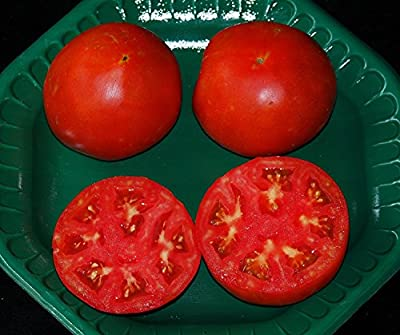 David's Garden Seeds Tomato Beefsteak Tycoon DK30046 (Red) 25 Hybrid Seeds