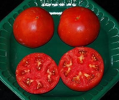 David's Garden Seeds Tomato Beefsteak Tycoon DK30046 (Red) 25 Hybrid Seeds