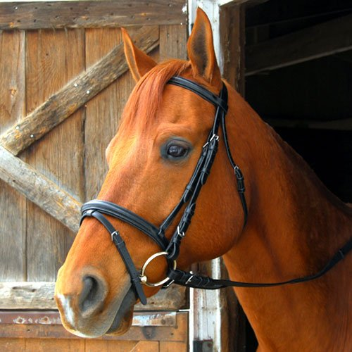 - Exselle Dressage/Eventing Bridle, Pony
